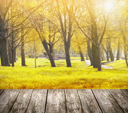 Terrace overlooking autumn park with trees and sunlight Stock Photography