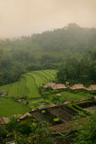 Terrace paddy field Stock Image