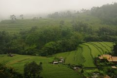 Terrace paddy field Stock Photo