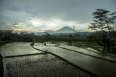 Terrace paddy fields on a rainy day with mountain background Royalty Free Stock Photography
