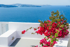 Terrace with red flowers. Santorini island, Greece. Stock Photography
