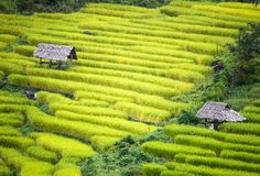 Terrace rice farm stock photos