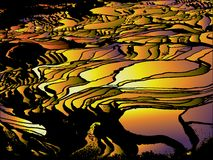 Terrace Rice Field Abstract Pattern. Background Stock Photography