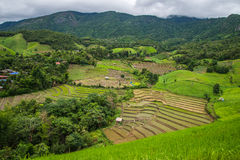 Terrace rice field Royalty Free Stock Image