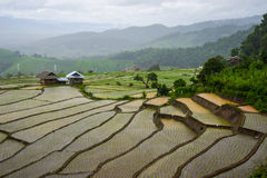 Terrace rice field Royalty Free Stock Photography