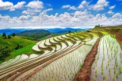 Terrace rice field of Ban pa bong piang in Chiangmai. Stock Photography