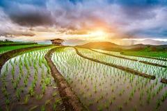Terrace rice field of Ban pa bong piang in Chiangmai. Royalty Free Stock Photography