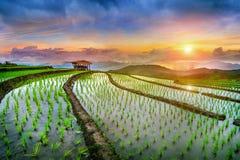 Terrace rice field of Ban pa bong piang in Chiangmai. Stock Image