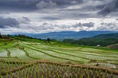 Terrace rice field Royalty Free Stock Photos