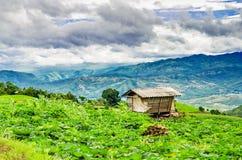 Terrace rice field Stock Photos