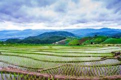Terrace rice field Royalty Free Stock Photo