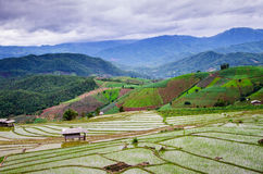 Terrace rice field Stock Images