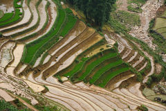 Terrace rice field at irrigate season Royalty Free Stock Images