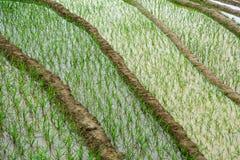 Terrace rice field at irrigate season Stock Photo