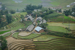 Terrace rice field at irrigate season in Sapa Stock Images