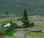 Terrace rice field at irrigate season in Sapa Royalty Free Stock Image