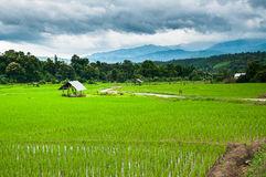 Terrace rice field with mountain Royalty Free Stock Photos