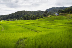 Terrace rice field over the mountain Stock Images