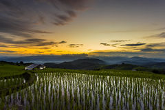 Terrace rice field over the mountain Stock Photo