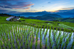 Terrace rice field over the mountain Royalty Free Stock Photography