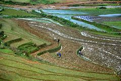 Terrace rice field in Sapa Stock Images