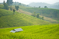Terrace rice field with shack. On mountain background Royalty Free Stock Photo