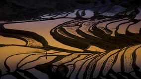 Terrace rice field in Yuanyang Stock Images