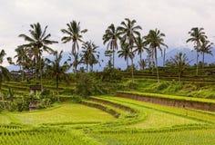 Terrace rice fields Stock Photos