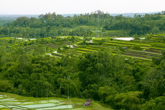 Terrace rice fields Stock Image