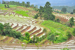 Terrace rice fields Stock Images