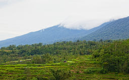 Terrace rice fields Royalty Free Stock Photography