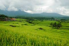 Terrace rice fields, Bali, Indonesia Royalty Free Stock Photos