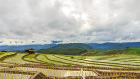Terrace rice fields. In Chiang mai,Thailand stock video