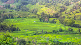 Terrace rice fields in Chiangmai Thailand. Royalty Free Stock Photography