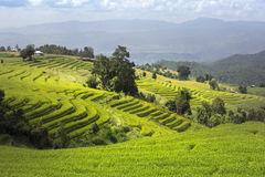 Terrace rice fields in Chiangmai Thailand. Stock Photography