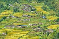 Terrace rice fields in Nepal Royalty Free Stock Image