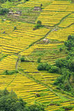Terrace rice fields in Nepal Stock Photo