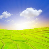 Terrace rice fields with sunrise Royalty Free Stock Images