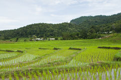Terrace rice fields in Thailand. Stock Photo