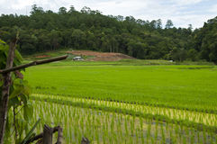 Terrace rice fields in Thailand. Stock Image