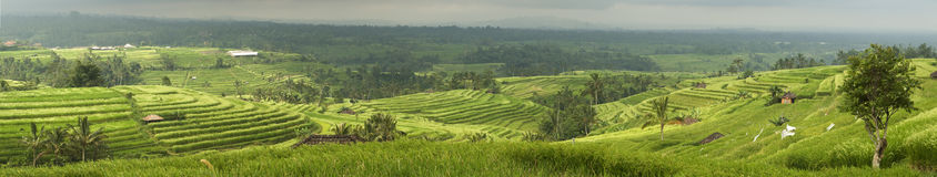 Terrace Rice Paddy Field Royalty Free Stock Images