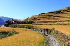 Terrace Rice Paddy Field,Nepal. royalty free stock photography