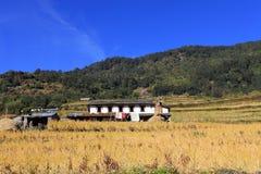 Terrace Rice Paddy Field,Nepal. stock image