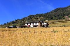 Terrace Rice Paddy Field,Nepal. stock photo