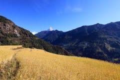 Terrace Rice Paddy Field,Nepal. stock photography
