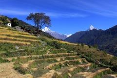 Terrace Rice Paddy Field,Nepal. royalty free stock image