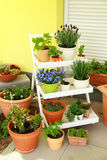 Terrace or roof gardening Royalty Free Stock Photo
