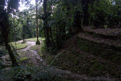 Terrace's, Ciudad Perdida (Lost City), Columbia Stock Images