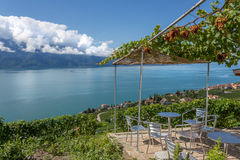 A terrace in the vineyards above Lake Leman Royalty Free Stock Image