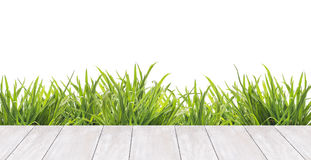 Terrace of white boards and grass ,border,isolated. Terrace of white boards and fresh green grass ,border,  isolated Stock Image